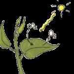 Логотип группы (Физиология растений. ЛПЗ (ГББZ-21-31))